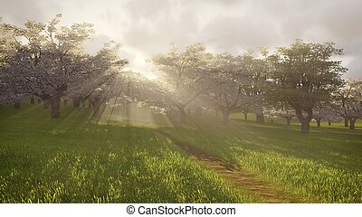 Blossoming cherry orchard in the sunlight 1 - Beautiful...