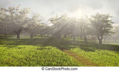 Blossoming cherry orchard in the sunlight 2 - Beautiful...