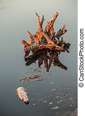 Lake water and tree stumps The Ukraine