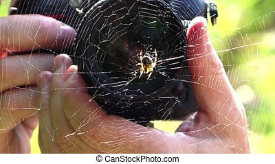 taking a macro photo of a spider - photographer and spider...