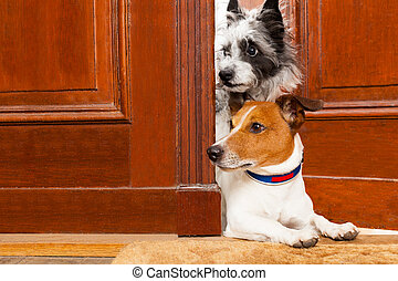 nosy dogs at the door