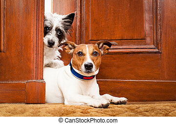 beware of dogs - couple of dogs watching at the door at home...