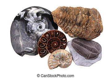 old fossil collection isolated on the white background