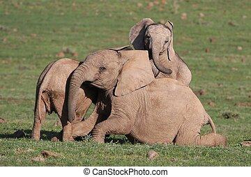 baby, Spaß, afrikanisch, elefant