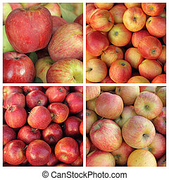 collection of red apples cultivars as background