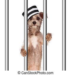 Bad Dog Prisoner In Jail - Funny image of a bad dog wearing...