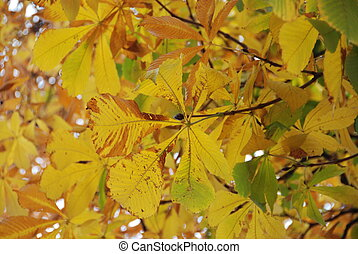 Fall leave - A view of yellow leaves during the fall