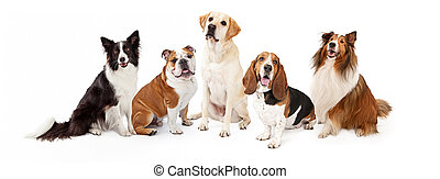 Common Family Dog Breeds Group - A row of six common dog...