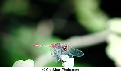 dragonfly - Insects world Beautiful dragonfly close up