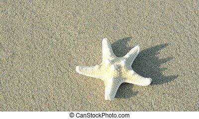 kidnapped starfish - starfish close up