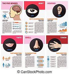 The Five Senses Chart Diagram Infographic Infographic Design...