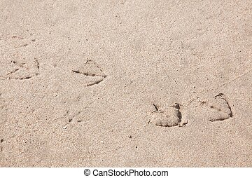 Sand print - Footprints are the impressions or images left...
