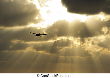 Sun ray heaven - The suns rays break through the clouds as a...