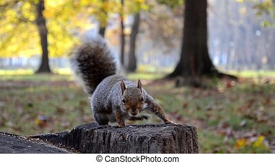 a squirrel catches a nut - feeding squirrels in a park