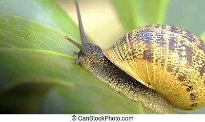 snail, close up - snail macro shot