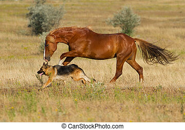 Horse and dog run -  Red horse and dog play in the meadow