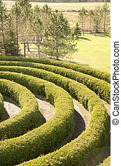 partial view of a maze - partial view of a cedar hedge maze