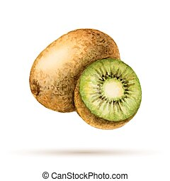 Kiwi hand drawn watercolor, on a white background. Vector...