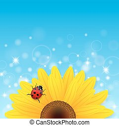 Sunflower and ladybird on blue background.