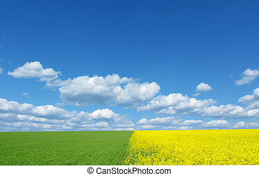 landscape of three colors - yellow rape, green wheat and sky...