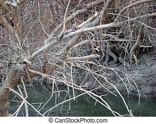 Wild vegetation on the Danube