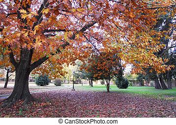 Oak tree in automn