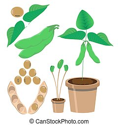 soy vector illustration - vector illustration of soy bean...