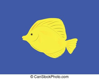 yellow fish - vector,yellow tang fish isolated on blue...
