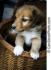 Cute puppy watching life around from the basket