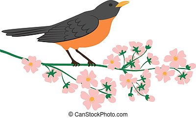 robin bird - Symbol of spring - american robin bird sitting...