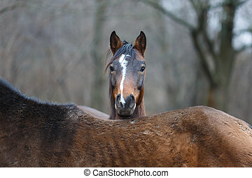 Portrait of wild horse - Wild horse close-up portrait on the...