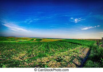 green field under blue cloud sky