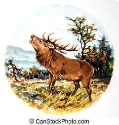 Roaring red deer - The picture shows a red deer in its...