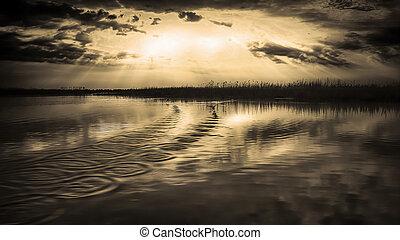 freedom in Danube Delta - The Danube Delta is the second...
