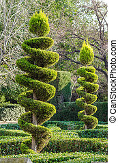 Topiary - Tall elegantly trimmed trees in a park