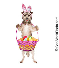 Cute Easter Bunny Dog - A cute and happy terrier dog wearing...