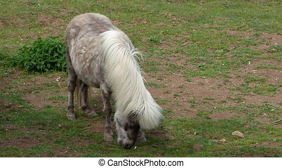 Grazing light brown pony