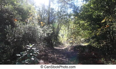 Walk through the colorful forest - camera moves along path...