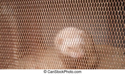 Platinum mink in cell. breeding of fur-bearing animals -...