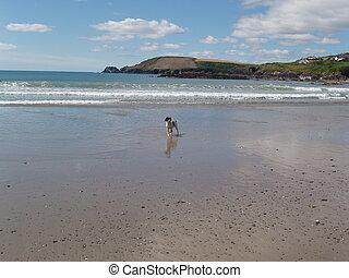 Dog Beach - A dog running on the beach.