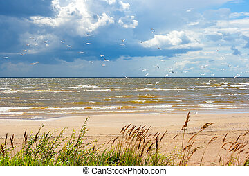 Shore of the Lake Peipus Estonia - Seagull on a shore of the...