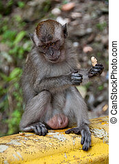 Sad Monkey Holding a Peanut on Green Background