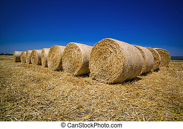 cereal bales of straw - bales of corn after harvesting a...