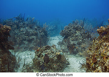 Bahamian reef - Atlantic ocean coral reef off the shores of...