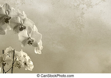 background floral composition with orchids and rough texture...