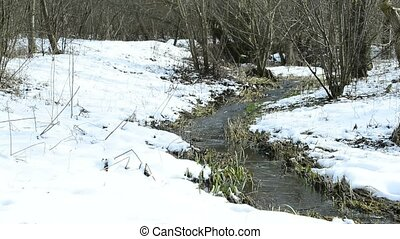 Hazelnut blossom and creek in wintertime