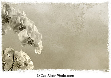 textured floral background with orchids with place for text...