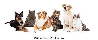 貓, 組, 狗