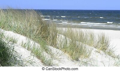 Baltic Sea in Poland, beach of Swinousjcie with sand-sedge...