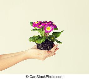 女性, 土壌, 花, 保有物, 手
